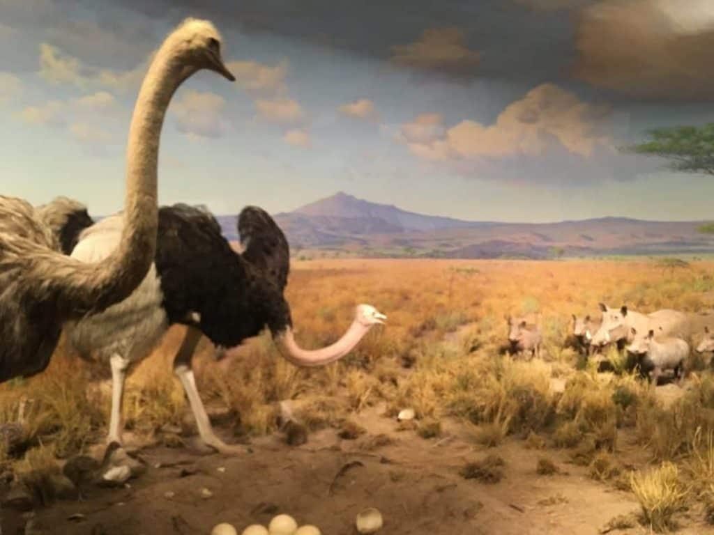American museum of Natural History dettaglio dell'interno